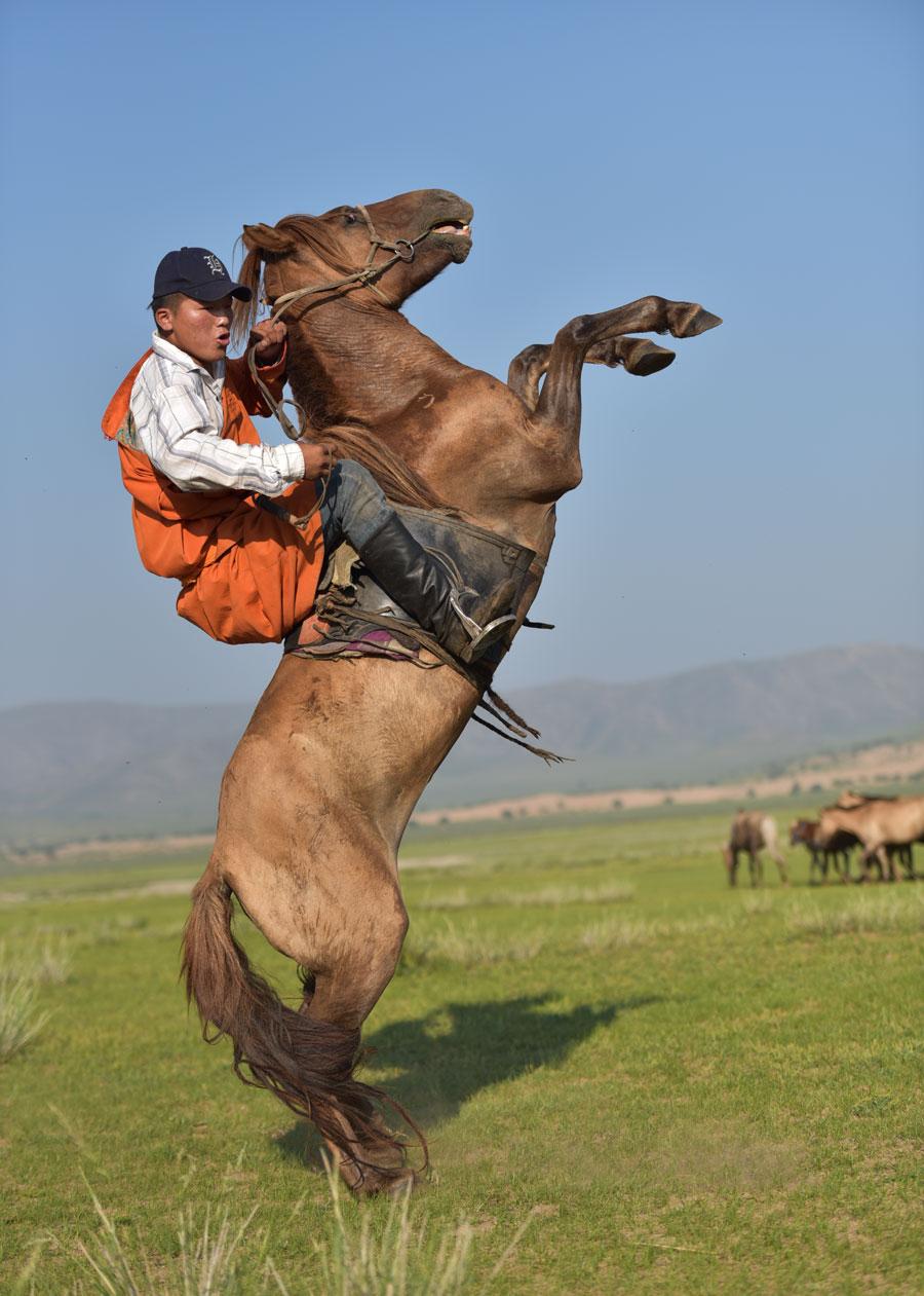 Pferd kennenlernen